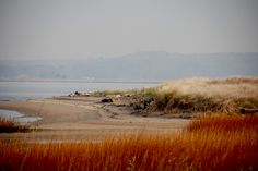 can't wait to spend a week with stephen at this great beach! - fenwick, delaware. :)