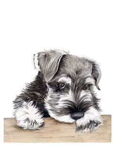 A personal favorite from my Etsy shop https://www.etsy.com/listing/484470514/mini-schnauzer-watercolor-painting