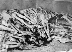 "Holocaust Gas Chambers | EPA's ""Science"" Evokes Nazi Death Camp Memories"