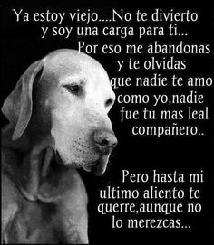 Awwww que triste me partio mi corazon😭😭😭😭😭😭😭😭😭😭😭😭😭😭😭😭😭😭😭😭😭 Animals And Pets, Baby Animals, Cute Animals, I Love Dogs, Cute Dogs, Dog Friends, Best Friends, Stop Animal Cruelty, Pug Puppies