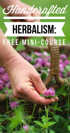 Handcrafted Herbalism: A free online mini-course with Chestnut School of Herbal Medicine