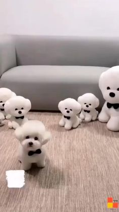 Cute Teacup Puppies, Cute Baby Puppies, Cute Animals Puppies, Baby Animals Super Cute, Cute Little Animals, Cute Small Dogs, Cute Funny Dogs, Cute Funny Animals, Cute Small Dog Breeds