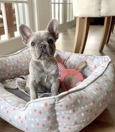 The major breeds of bulldogs are English bulldog, American bulldog, and French bulldog. The bulldog has a broad shoulder which matches with the head. Bulldog Puppies For Sale, French Bulldog Puppies, Cute Dogs And Puppies, Doggies, Frenchie Puppies, Cute Little Animals, Cute Funny Animals, Cute French Bulldog, French Bulldogs