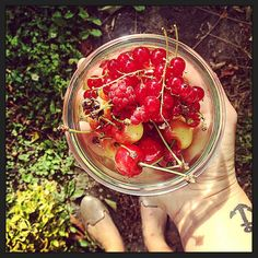 Day 178 - •••H•A•R•V•E•S•T••• Love the new home of my friends ( ==> especially their garden !). #weekend #friends #place #harvest #fresh #fruits #FromTheGarden #redcurrent #cherry #raspberry #nature #bowl #yes #for #berries #anchor #tattoo