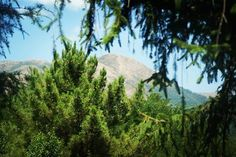 Buongiorno tutti !!! Colline Toscana, Gualdo (Comune Massarosa), Italia  #italia #italy #italien #włochy #Италия #loveitaly #italian_places #igersitalia #igersitaly #ig_italy #ig_italia #toscana #tuscany #toskania #Тоскана #igerstoscana #igerstuscany #ig_tuscany #ig_toscana #hills #nature #naturelovers #gualdo #massarosa #likeit #followme #picoftheday #sunnyday #italiaamoremio #view