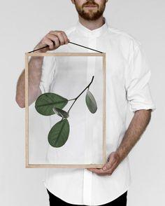 FLOATING LEAVES #quadro #frame #scandinaviandesign #design #leveza #botanical #print #art #decor #decora #nature