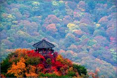 Mount. Naejang in Autumn