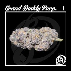 Grad Daddy Purp.