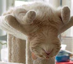 Cat, Sleeping. Inverted lotus position.