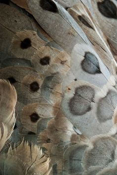 Bird feather ~