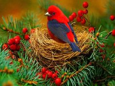 Holiday bird