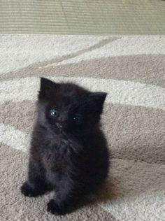 cat-pic:  もふもふ
