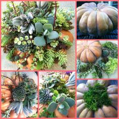 Pumpkin decorated with succulents http://thegardendiaries.wordpress.com/2013/10/23/succulent-pumpkins-for-the-fall/