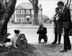 Photographers snap pictures of Pickles, the dog who sniffed out the missing Jules Rimet World Cup Trophy, stolen on 20 March 1966 from the National Stamp Exhibition in Britain.  Photo: Central Press/Getty Images