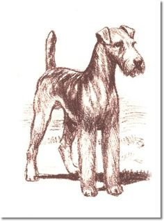 irish terrier coloring pages - photo#50