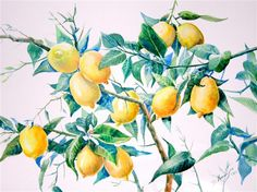 Original art for sale at UGallery.com | Lemons by Suren Nersisyan | $315 | watercolor painting | 15 h x 20 w | http://www.ugallery.com/watercolor-painting-lemons