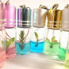Baby Plante dragonne (Bamboo Plant In a Bottle) lot de 2