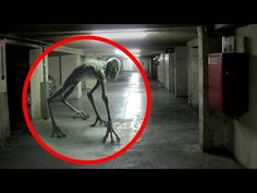 50 Mysterious Creatures Caught on Tape - YouTube