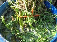 αφρίζει Good Morning Quotes, Garden, Plants, Blog, Garten, Lawn And Garden, Gardens, Blogging, Plant