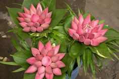 Door Flower Decoration, Home Flower Decor, Flower Decorations, Wedding Decorations, Flower Garland Wedding, Flower Garlands, Beautiful Rose Flowers, Amazing Flowers, Fall Wedding Arches