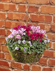 Autumn Hanging Basket