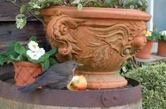 Whichford Pottery: New Year, Old Leaf. / Potting Up...