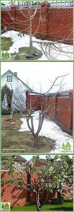 Обрезка яблонь весной | Дачная жизнь - сад, огород, дача. Омолаживающая | сад-огород | Постила