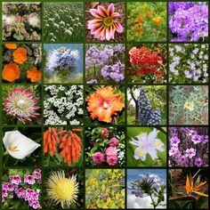 #Madeira, uma ilha tropical em plena Europa, com uma natureza exuberante e surpreendente, onde as #flores e frutos exóticos competem em variedade e colorido.