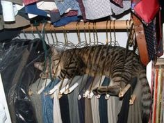 And you wonder why your slacks have cat hair!