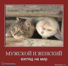 Gallery.ru / Фото #1 - Смейтесь на здоровье! - Secunda