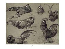 DoverPictura - Meheut's Animals