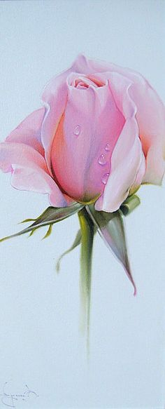 Rose Drawing and Paintings: In the earlier post we have shown you some beautiful Flower drawings, now in this post we have included some 25 Beautiful Rose drawings and paintings for your inspiration Art Floral, Deco Floral, Beautiful Rose Drawing, Beautiful Roses, Watercolor Flowers, Watercolor Paintings, Watercolors, Drawing Flowers, Decoupage
