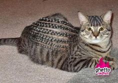 Ghetto cat...my first thought...how the heck you get that cat to stay still that long???? Still laughing