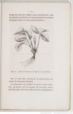 Les Bonnes fraises, manière de les cultiver pour les avoir au maximum de beauté,... par Ferdinand Gloede,...