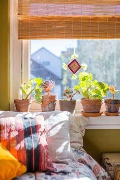 Nắng ban mai bên khung cửa sổ
