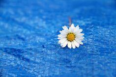 Beautiful Blue Monday! by Homayoun !, via Flickr