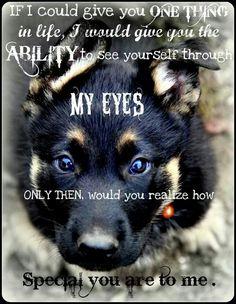 My eyes MY love www.capemaydogs.com