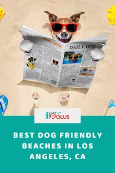 The Best Dog Friendly Beaches in Los Angeles, California.  A best dog beach will certainly offer a safe environment for pet dogs to run, play, swim and also engage with various other pets. The beach is kept clean; pet dog friendly beaches offer supplies for clean up as well as have food and water easily available. While lots of canines prefer off-leash dog beaches, some prefer the safety and security of the leash. #dog #friendly #beach #california #paws #losangeles #leash #tips #travel #pet Places In California, California Travel, Pet Travel Carrier, Travel Supplies, Dog Beach, Los Angeles California, Dog Friends, Best Dogs, Beaches