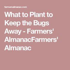 What to Plant to Keep the Bugs Away - Farmers' AlmanacFarmers' Almanac