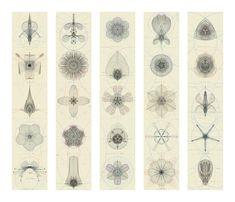 Frantic Gallery | Macoto Murayama