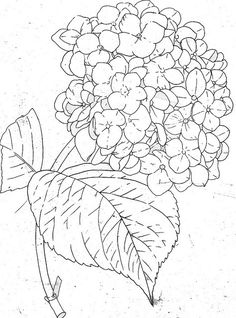 Embroidery Patterns Hydrangea Line Drawing Fabric Painting, Painting & Drawing, Drawing Tips, Colouring Pages, Coloring Books, Free Coloring, Embroidery Designs, Embroidery Tools, Embroidery Stitches