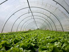 Farmers can apply for funding to build hoop houses through the USDA