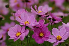 Nature, Plants, Flowers Garden, Gardening, Google, Flowers, Naturaleza, Lawn And Garden, Plant