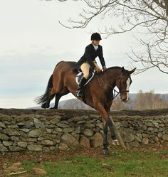 The most important role of equestrian clothing is for security Although horses can be trained they can be unforeseeable when provoked. Riders are susceptible while riding and handling horses, espec… Cute Horses, Pretty Horses, Horse Love, Beautiful Horses, Cross Country Jumps, English Riding, Show Jumping, Horse Girl, Horse Pictures