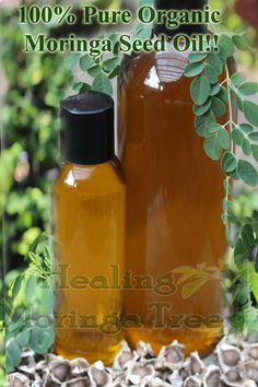 Organic Moringa seed oil! Pure and Natural~@ www.Healingmoringatree.com