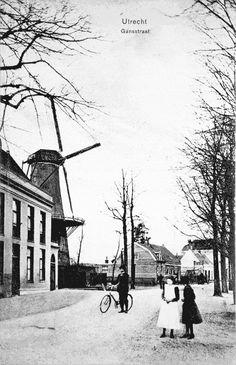 De Gansstraat met molen de Gans en het voormalige huis Soestbergen  Prentbriefkaart rond 1907 uitgegeven door G.F. Sijnhorst, sigarensorteerder en winkelier in de Gansstraat. Foto genomen vanuit het oosten, ter hoogte van de eerste algemene begraafplaats Soestbergen, die in 1830 door architect J.D. Zocher jr. in romantische Engelse landschapsstijl was aangelegd. Molen afgebroken in 1920 ivm verkoop erf aan Peek & Cloppenburg.