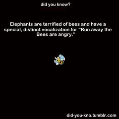 elephants are scared of bees