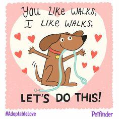 Dog Walking - Dog Training Basics For Any Family - Best Dog Training Adoption Quotes, Pet Adoption, Dog Quotes, Animal Quotes, Animal Rescue League, Dog Texts, Dog Silhouette, Best Dog Training, Dog Walking