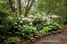 Dirt Therapy: Hydrangeas and host as