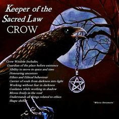 The Crow – Keeper of the Sacred Law Wicca Witchcraft, Magick, Animal Spirit Guides, Crow Spirit Animal, Crows Ravens, Arte Horror, Animal Totems, Book Of Shadows, Light In The Dark